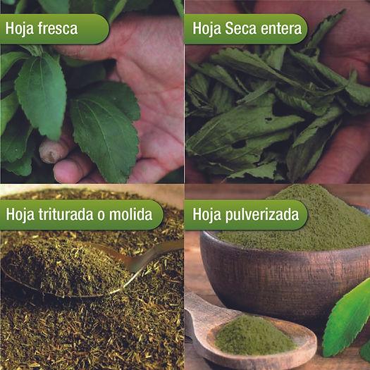 Formatos de la Stevia.jpg