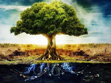 Prenons exemple sur les arbres....