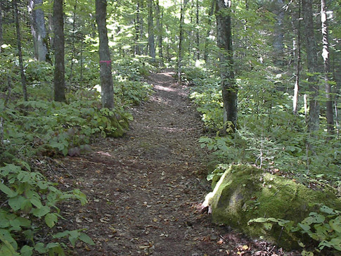 6.5 km Forest Hiking Trail