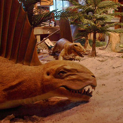 Brule Fossil Display