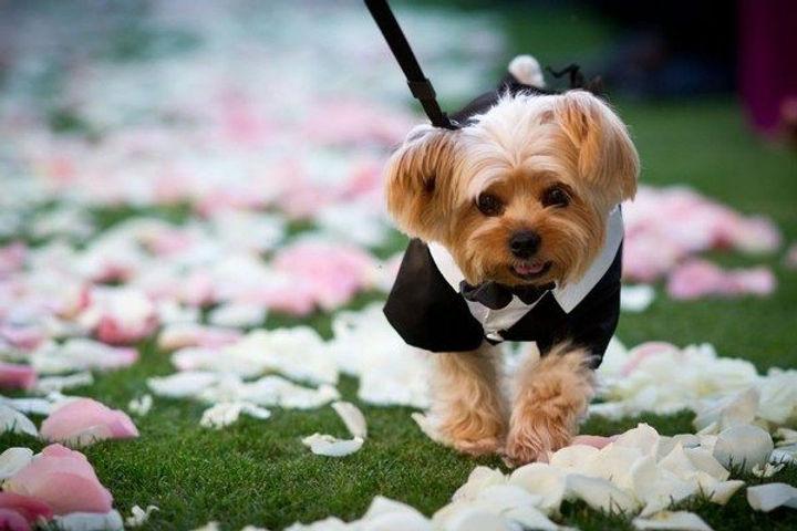 dogs_in_wedding_23jpg.jpg