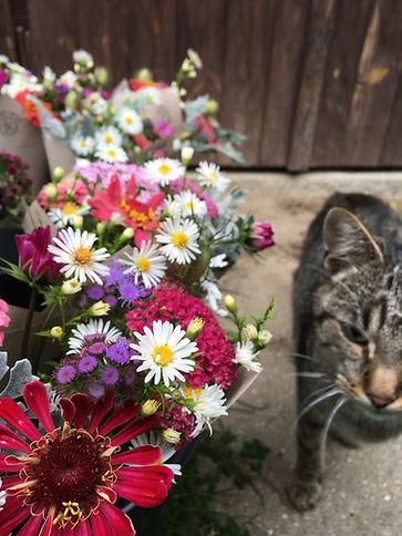 barevné kytice a mourovatý kocour, růžová bílá fialová