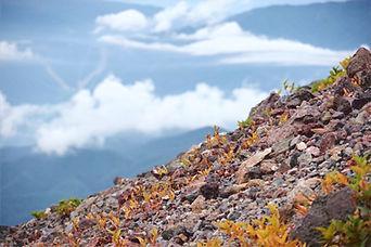 【ヤマ紹介】 そろそろ見頃!9月中旬の日光白根山へ