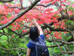 【ツアーレポート】 苔むす森に輝くアマギツツジを求めて、いざ天城山へ!