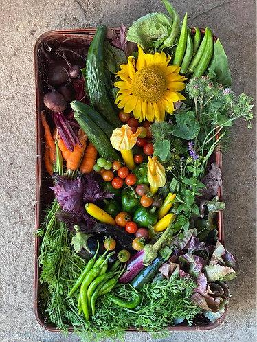 旬のお野菜セット(Seasonal Vegetable Set)