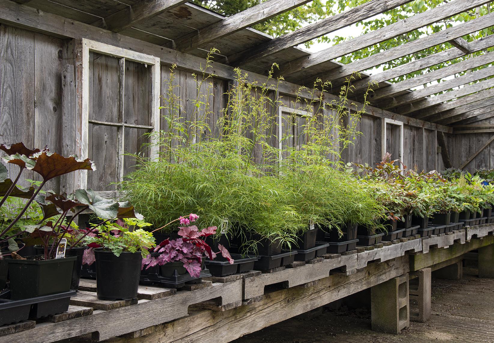 greenhouse-photos