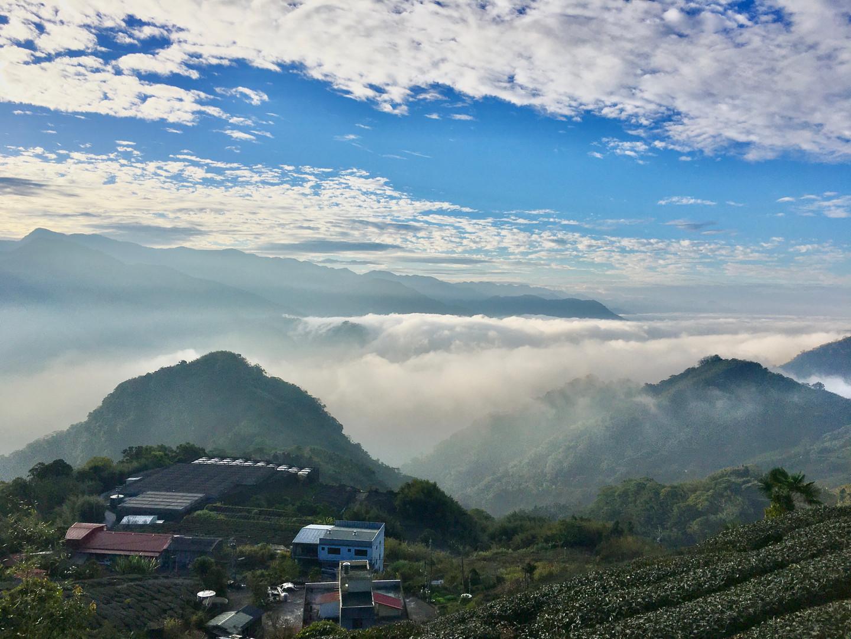 賞日茶園的日出雲海