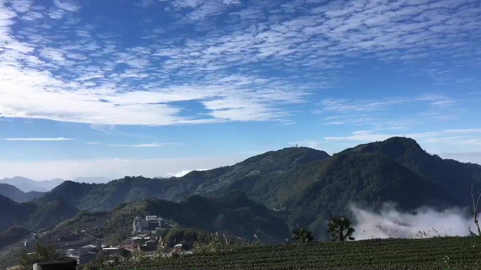 慶香茶園雲海