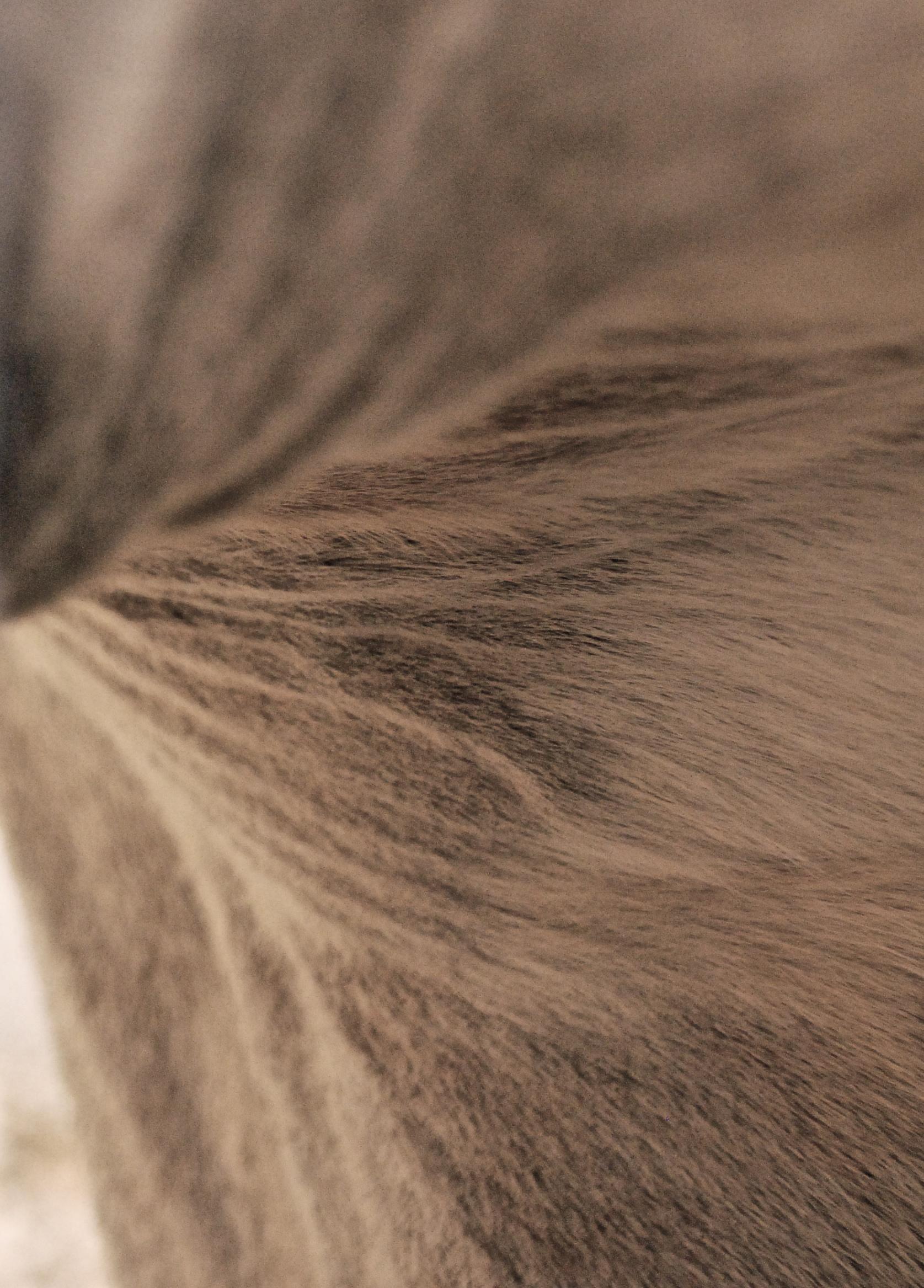 Fur 4