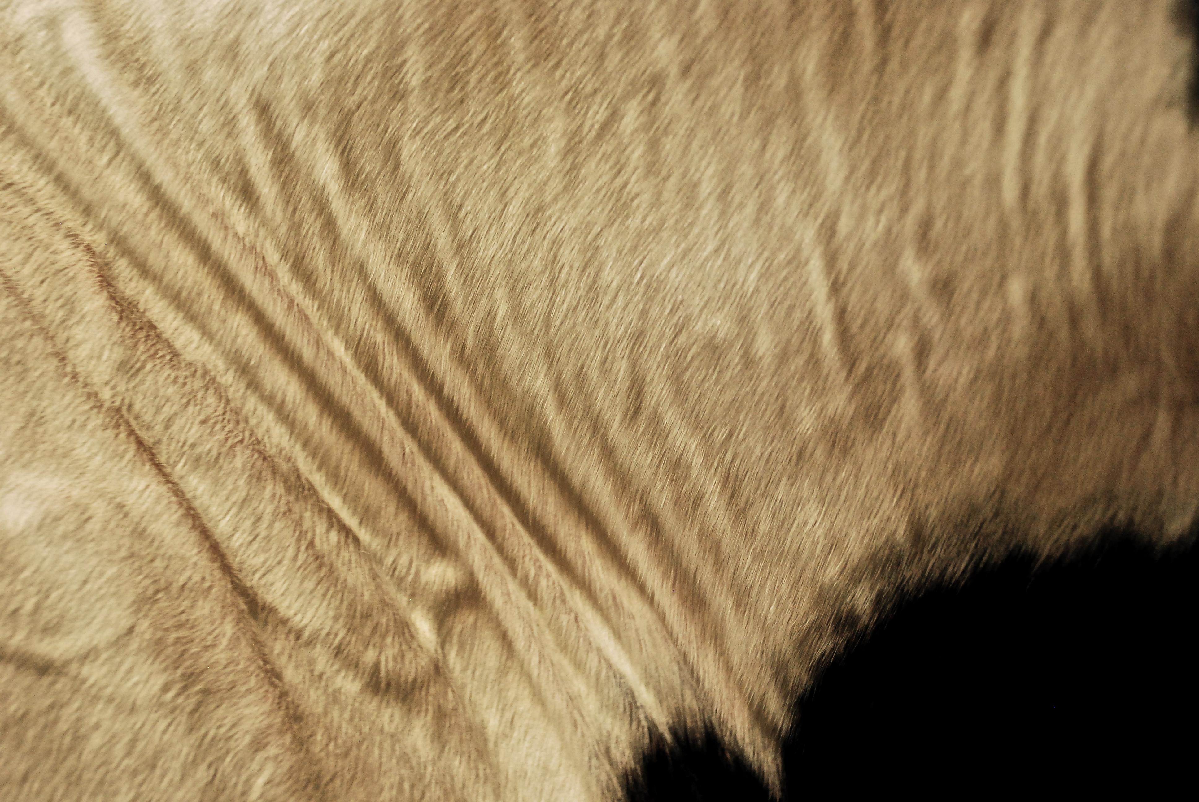 Fur 3