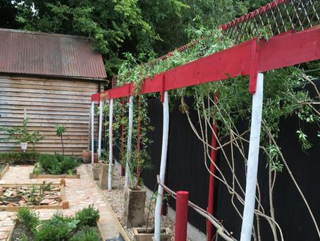 Recreating a Roman Garden: Experiencing a Healthy Space
