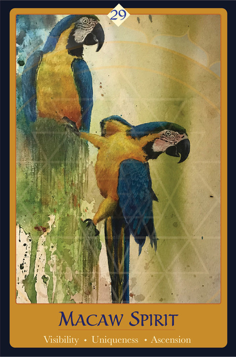 Macaw Spirit Card 3.8x 5.8.jpg
