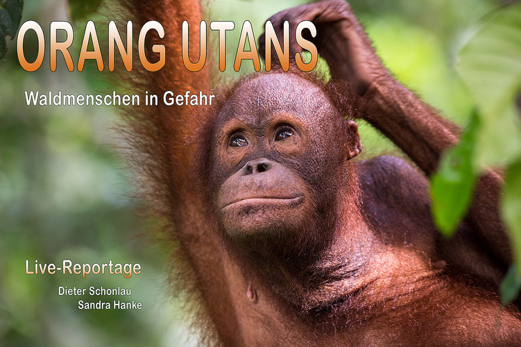 ©_Dieter_Schonlau-Plakat_KLEIN_Orang_Uta