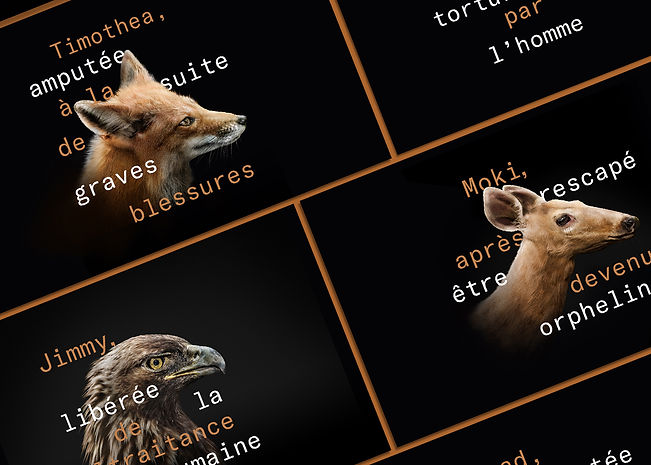 Affiches_zoo_groupe.jpg