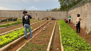 Secretarias de Agricultura e Obras colaboram com doação de hortaliças produzidas no Socioeducativo