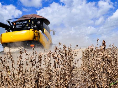 MT: produtividade da soja deve ser de 57,81 sc/ha