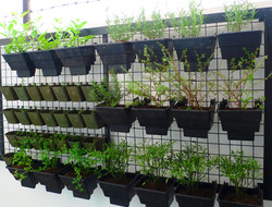 Aventi Townhomes vertical garden
