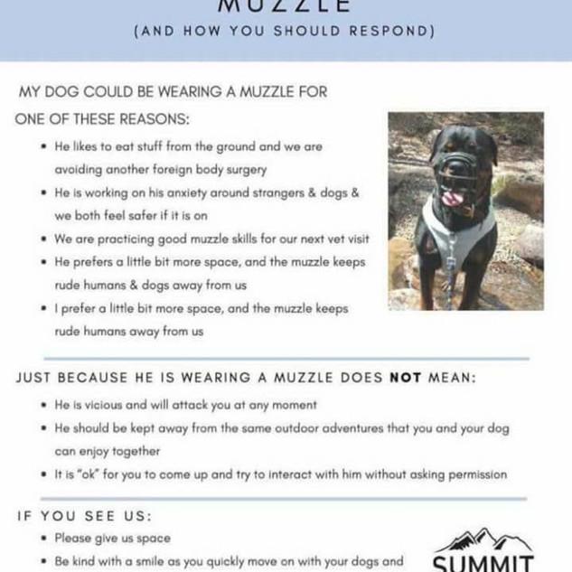 why a muzzle.jpg