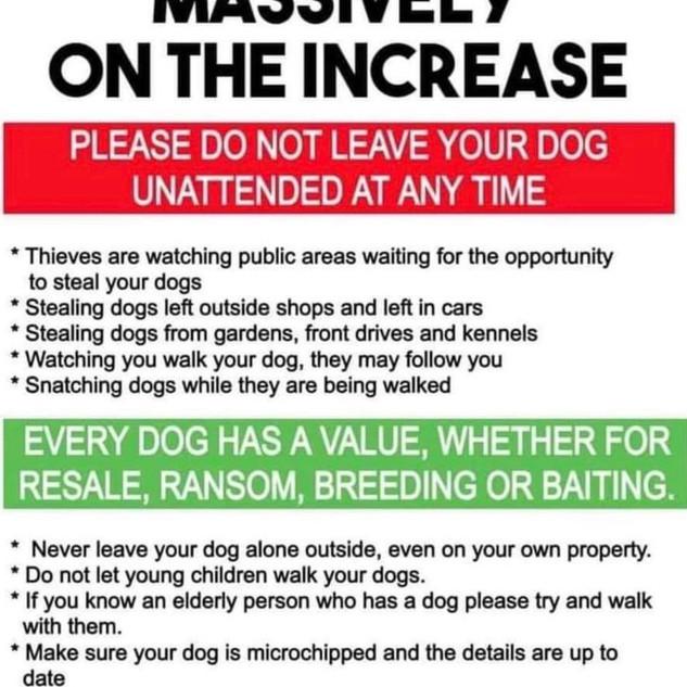 dog theft.jpg