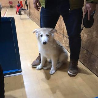 Zena a German Shepherd