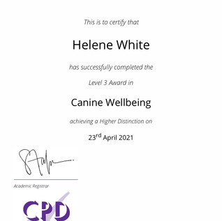 canine wellbeing.jpg