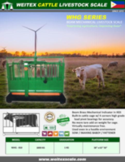 2020 WHG Cattle Series Pic.jpg