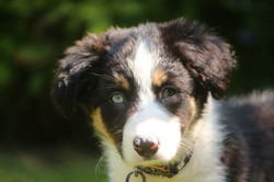 and here he was just 8 weeks old.jpg