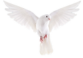 dove-5205023-1.png