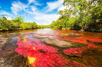 Multicolored river in Colombia, Cano Cri