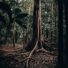 amazon colombia.jpg