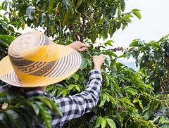 coffee farm activity.jpeg