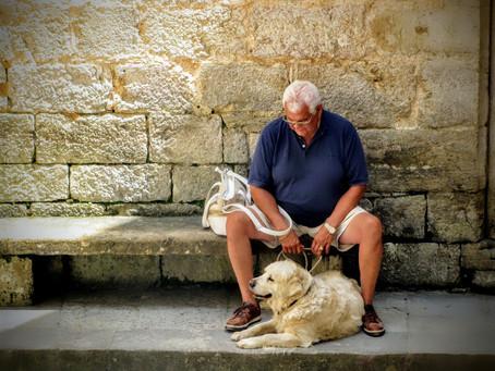Los beneficios de los perros en personas mayores