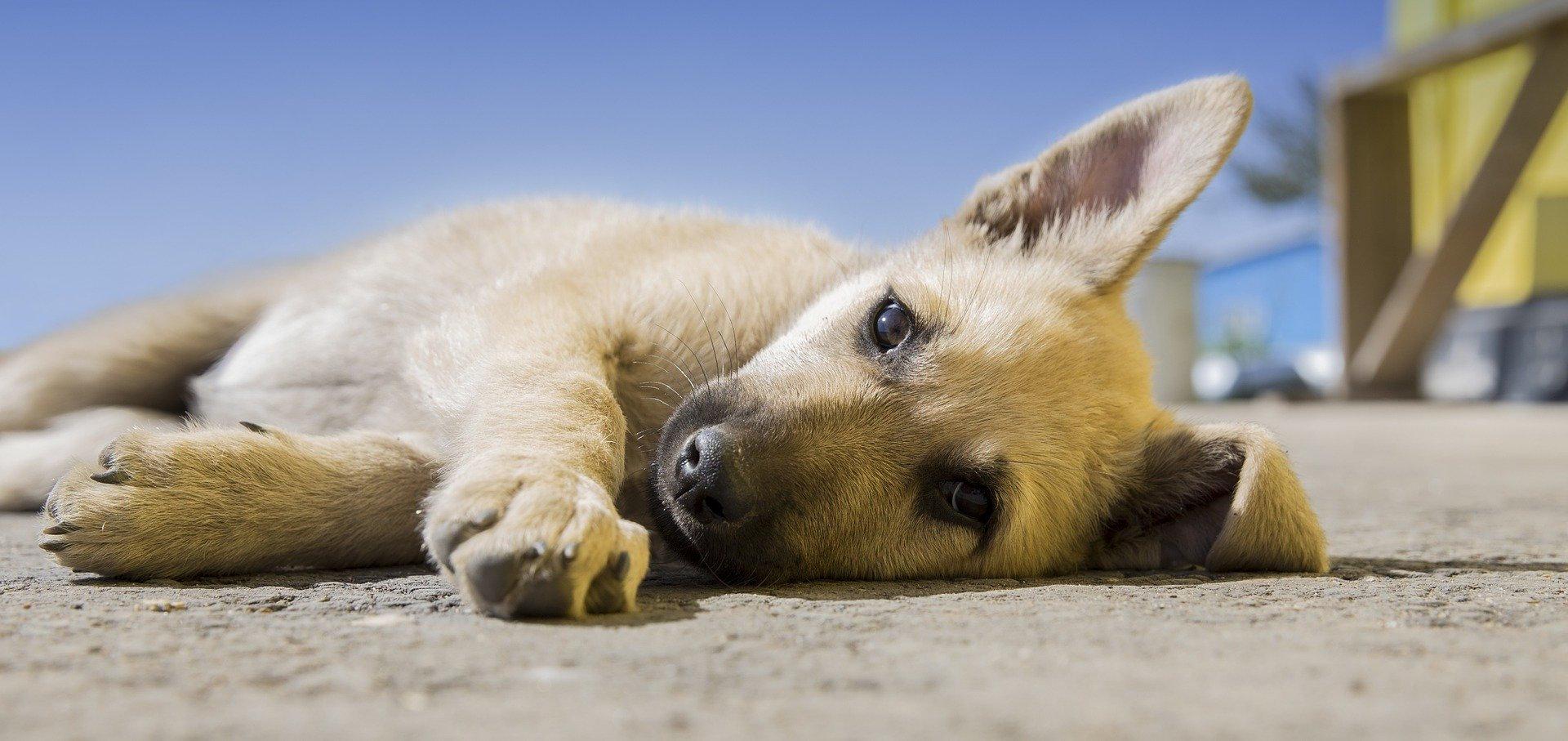 Bono 10 clases para cachorro