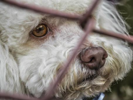 Las 10 reglas del perro adoptado