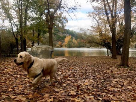 Domina la caminata con tu perro