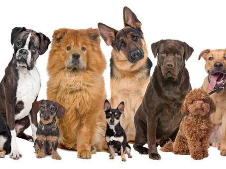 Normativa para perros en la comunidad de Madrid