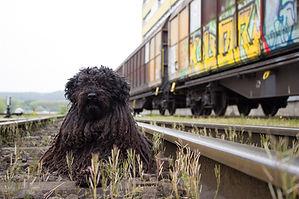 perro tren.jpg