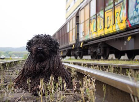 Como viajar con el perro en transporte público