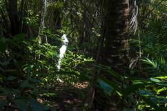 Natureza Desnuda