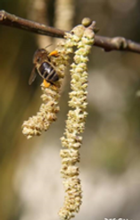 abeille 2.PNG