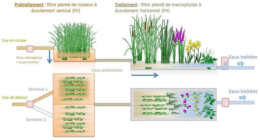 La phytoépuration c'est quoi ?