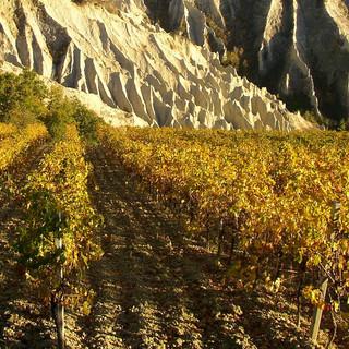 Vigne e calanchi