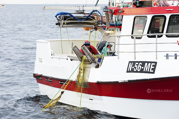 cod's fishing