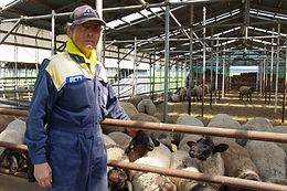 """Haguro Men-yo,"" Sheep meat"