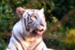 Bhopal Tourism, Bhopal Attractions, Van Vihar National Park, Bhopal Wildlife Tourist Attractions