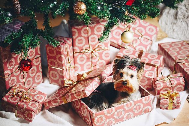 Um Weihnachten.10 Gefahren Zu Weihnachten Die Man Kennen Sollte Um Nicht