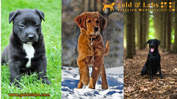 Puppies before Selection