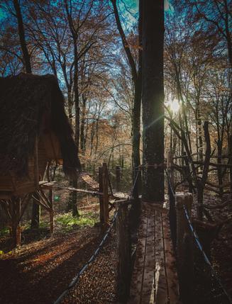 cabane dans la forêt