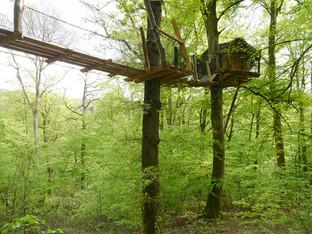 Tree house et son pont de singe