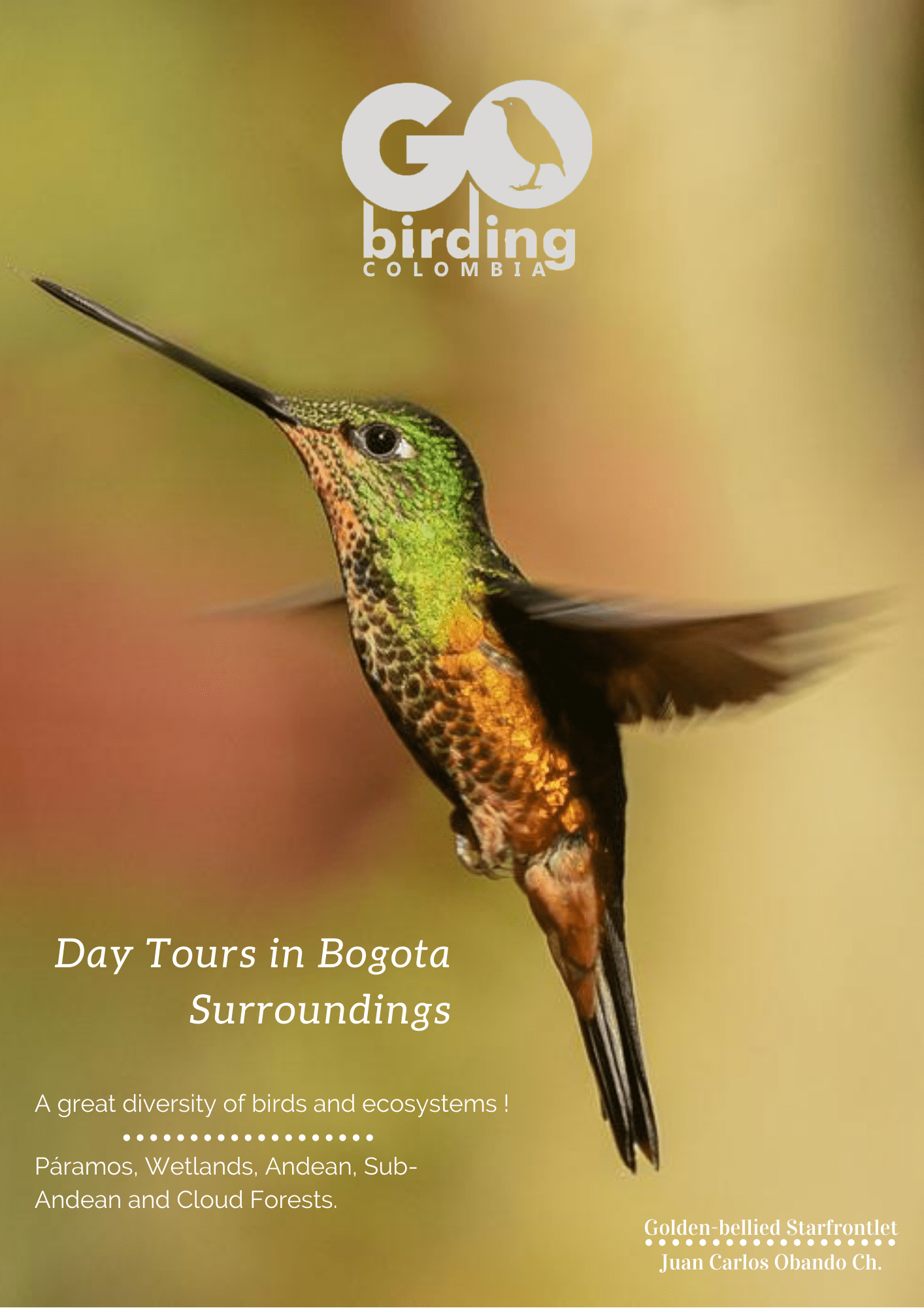 Go Birding Colombia, Day Tours Bogota.
